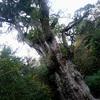 屋久島へ行ってきました 縄文杉