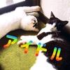 元気をくれるアイドルはやっぱりウチの猫