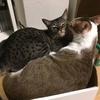 仲良しだった兄弟ネコが突然、不仲になり悲しんでいる