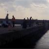 三重県波切港 ジギング アオリイカ釣り