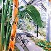死神の館の温室には、生命の植物が集められている|ハンス・クリスチャン・アンデルセンの童話《ある母親の物語》から
