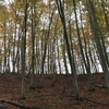 自然そのままの姿を楽しむ!池谷集落のブナ林。