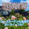 【白い恋人パークはフラワー&ベリー 札幌市】ローズガーデンのバラの見頃や周辺のおすすめ飲食店
