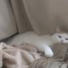 もういっそ横になりたい時にお勧めの何かを枕にする猫様特集