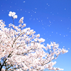 「桜の咲く頃にはいつも思いだす…」episode-7