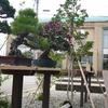 盆栽の棚、完成