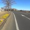 ぼくの自転車:DAHON Mu SLXで新春ライド~柏・牛久・大洗~③土浦・霞ヶ浦編