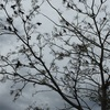 今日も真冬の雨日(◞‸◟)