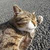5月前半の #ねこ #cat #猫 その1