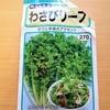 水耕栽培で「わさび菜」を育て始めました。ピリッとしたサラダが食べたいです
