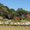 霊園風景 その16 「‥‥ 想いも形も様々に  芝生墓は映えて」