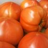 【気まぐれ小話】トマト