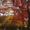 紅葉を見に行く 愛宕山登山ツアー 後編