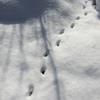 新雪と『とちおとめ』