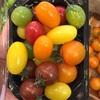 フルーツ色のトマト