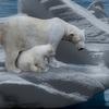 「北極クマ」を眺めながら泊る中国のホテルは動物虐待になるのか!