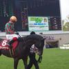 フラワーC 傾向 中9週以上で出走した馬に注目!