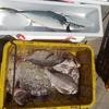 海上釣堀で大漁を狙うために一番重要なこと
