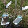 先週末、果樹を植栽しました。