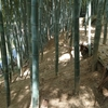 京都・大原野の自社竹林のたけのこ最新情報2021