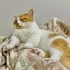 【猫学】飼い主が体調不良のときに愛猫が寄り添ってくれる理由3つ