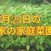 【早くない?正月用の黒豆】7月25日家の家庭菜園【むしろ遅い方です】