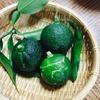 庭で採れた柚子で簡単柚子料理〜鳥もも肉塩煮込み、豚味噌そぼろ柚子詰め、長芋ワサビ漬の3品ご紹介〜
