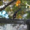 残堀川の小鳥たち