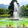 そういえば、緑の箱根は美しかった。