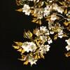 気がつけば桜も満開