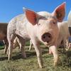 旦那に豚って言われた!見返す究極の3つのダイエット方法で絶対痩せてやる!