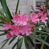 梅雨の合間の花