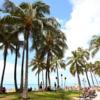 ―ハワイの日本食発信基地「ワイキキ横丁」から、夏休みイベントのお知らせー