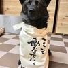 甲斐犬サン、4歳11ヶ月にしてガウガウ引退するの巻〜(◎皿◎)ナンデスト!