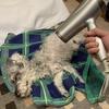 #愛犬ラブ。嫌いなお風呂に入れられる!(削除ブログ復活⑧)