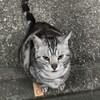 ぶすくれ猫/夜の猫はスマホで撮ろう!