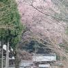 酒波寺のエドヒガン桜