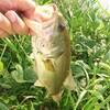 水路で釣りをすることにした