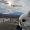 富士山に会いたい・・