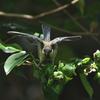 6月は幼鳥観察の季節です。