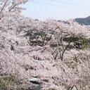 日本拳法道連盟・豊前福光派古術連盟 風門館公式ブログ