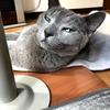 【猫さんと暮らす】宴の後の大騒ぎ【猫の日】