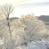 樹氷を見た事ありますか?極寒の地で見る美しい景色