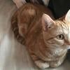 猫の避妊手術が延期になりました(;_;)