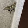 恵比寿で夜の蝶(本物)と遭遇
