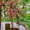 縁結び祈願!太宰府の竈門神社(かまどじんじゃ)は良縁のパワースポット
