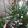 ひと雨ごとに育つ花たちとニームスプレー