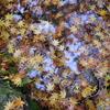 秋雨の中を歩く贅沢。万物がすがすがしく匂っている。天地がほほえんでいる。