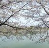 """""""桜に集う人々""""の表情に注目してみると?――前回のお題「桜」ふりかえり"""