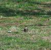 まとめて探鳥、小金井公園・石神井公園の野鳥。